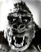Kong the ape
