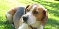Green Your Pet Care- Pet Food