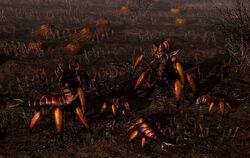 Harvestbugs