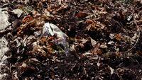 320-Cammy's body found by dog