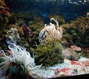 Acquario mediterraneo della Costa d'Argento