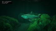 Peyote Plants Animals GTAVe Tiger Shark