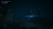 Peyote Plants Animals GTAVe Hammerhead Shark