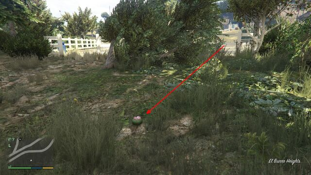 File:Peyote Plants GTAVe 22 El Burro Parking View.jpg