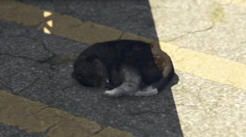 File:Cat-GTA-V.jpg