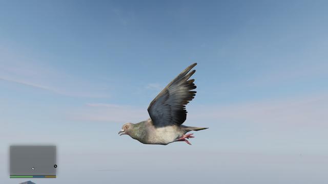 File:Peyote Plants Animals GTAVe Pigeon.png