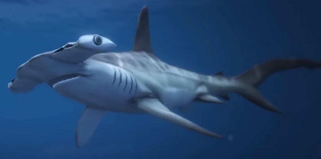 image hammerhead sharks gtave jpg gta wiki fandom powered by