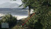 Peyote Plants GTAVe 21 East Island View