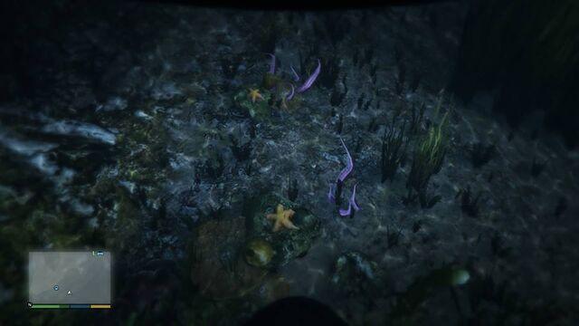 File:Starfish-GTAV-PS4.jpg