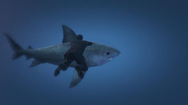 File:Shark beast around sea ped.jpg