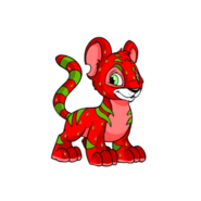 Kougra strawberry happy