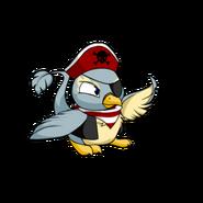 Pteri pirate