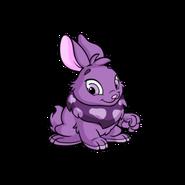 Cybunny purple