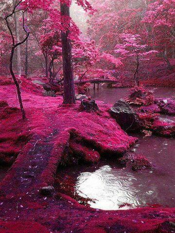 File:The pink lake.jpg