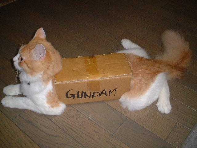 File:Box Cat.jpg