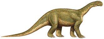 Jainosaurus,1