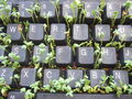 Keyboard and Cress-934.jpg