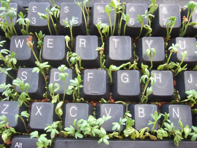 File:Keyboard and Cress-934.jpg