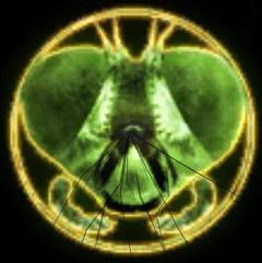 File:Toxicity symbol.jpg
