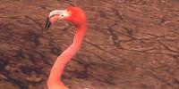 Troublesome Flamingo