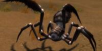 Stalking Nephila