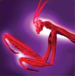File:Hi-res-Black Mantis Thrust.jpg