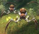 Maguuma Spider