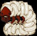 Quest beetle