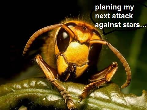 Datei:Hornet.jpg