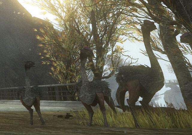 File:OstrichesWEINTERCONTINGENSY.jpg