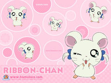 Ribbon 800 bg