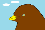 Alonso as a chick