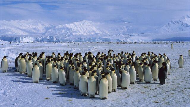 File:Antarctica-3.jpg