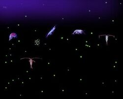 Plankton collage