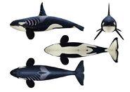 Killer Whales Concept Sheet