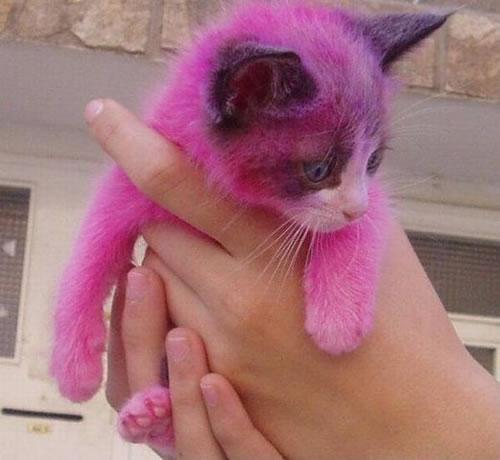 File:Pink-kitty.jpg