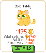 Gold Tabby New