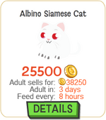 Albino Siamese Cat New