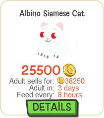 File:Albino Siamese Cat New.png