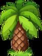 Date Palm (seaside)