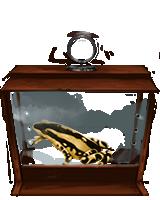 File:Harlequin Toad.png