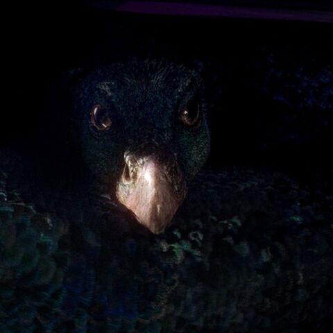 File:Occamy Fantastic Beasts CC Trailer.jpg