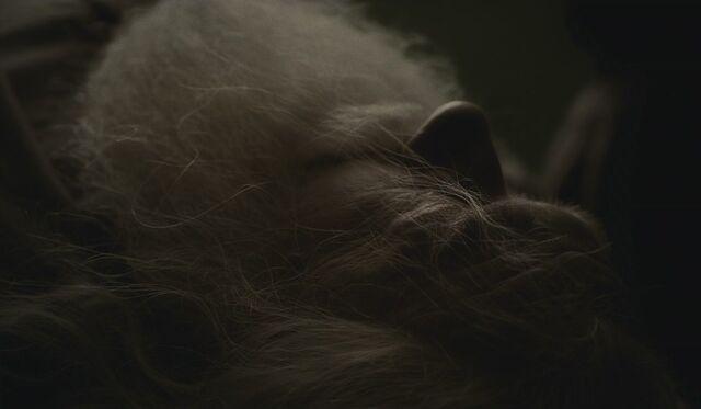 File:Albus Dumbledore dead.jpg