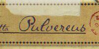 Blatta Pulvereus