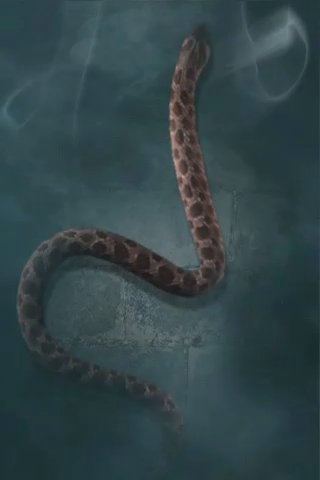 File:Common adder.PNG