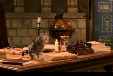File:Professor mcgonagall cat.png