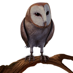 File:Barn Owl PM.png