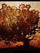 File:Elder tree.jpg