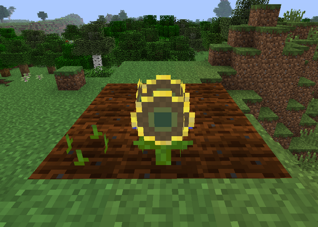 File:Sunflower Growth.png