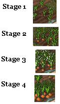 Файл:Carrot stages.png